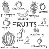 Vector image of the drawn fruit on a light background with the inscriptions under each icon. Graphic illustration. vector illustration