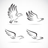 Vector image of an eagles design Royalty Free Stock Photos