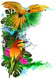 Tropical birds. Vector. Vector image of exotic birds. Additional format: made in CorelDRAW X13. Color settings: Tools/color management/Optimized for the Web royalty free stock images