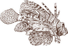 Exotic fish. Vector image of exotic tropical fish Royalty Free Stock Photos