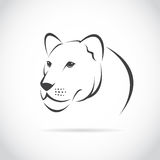 Vector image of an female lion head. On white background stock illustration