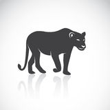 Vector image of an female lion Royalty Free Stock Photography