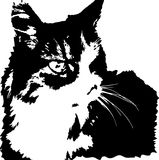 Vector image of fierce looking norwegian forest cat. Black and white Royalty Free Stock Photo