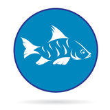 Vector image of an fish Royalty Free Stock Images