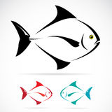 Vector image of an fish. On white background Royalty Free Stock Photo