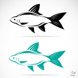 Vector image of an fish. On white background Royalty Free Stock Photography