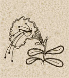 Vector image of a flower in vintage style Royalty Free Stock Images