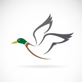Vector image of an flying wild duck design. Royalty Free Stock Photography