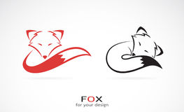 Vector image of an fox design Royalty Free Stock Image