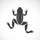 Vector image of a frog design Royalty Free Stock Images