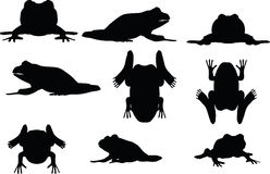 Vector Image - frog silhouette  on white background Royalty Free Stock Photography