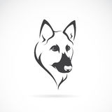 Vector image of an german shepherd face Stock Photo