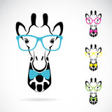 Vector image of a giraffe glasses Royalty Free Stock Images
