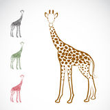 Vector image of an giraffe Stock Photos