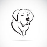 Vector image of golden retriever. On white background Stock Images