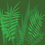 Vector image with green fern leaves Royalty Free Stock Images