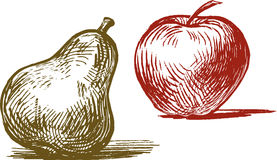 Apple and pear. Vector image of the hand drawn fruit royalty free illustration