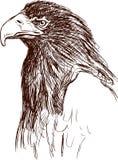 Bird of prey. Vector image of a head of a big eagle vector illustration