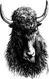 Bull head. Vector image of a head of a bull stock illustration