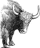 Bull. Vector image of a head of a bull royalty free illustration
