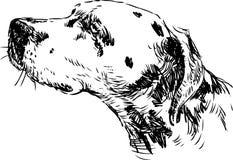 Head Dalmatians stock illustration