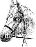 Horse head 2 Stock Image