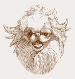 Portrait sketch of a japanese hin. Vector image of the head of a lap dog royalty free illustration