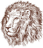 Lion head. Vector image of the head of a lion Stock Photo