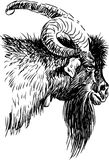 Goat head. Vector image of a head of old goat stock illustration