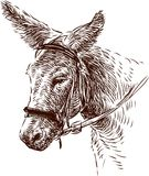 Donkey. Vector image of the head of a pack donkey stock illustration