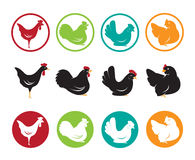Vector image of an hen design Stock Images