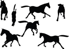 Vector Image - horse silhouette in fast trot pose  on white background Stock Photography