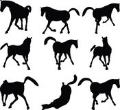 Vector Image - horse silhouette in looking good pose  on white background Stock Photography