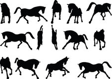 Vector Image - horse silhouette in running pose  on white background Stock Photography