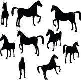 Vector Image - horse silhouette in show horse pose  on white background Royalty Free Stock Photos