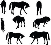 Vector Image - horse silhouette in standing around pose  on white background Royalty Free Stock Photography