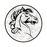 Vector image of an horse on white background Stock Images