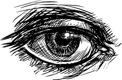 Eye. Vector image of a human eye royalty free illustration
