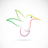 Vector image of an hummingbird design Royalty Free Stock Images