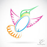 Vector image of an hummingbird Royalty Free Stock Photo