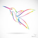 Vector image of an hummingbird Royalty Free Stock Photos