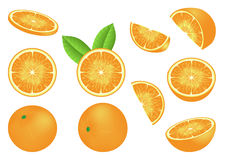 Vector image with isolated oranges Stock Images