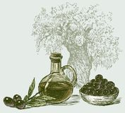 The olives and olive oil. Vector image of a jar with olive oil,ripe olives and olive tree Stock Photos
