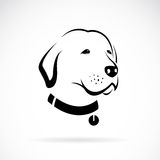 Vector image of an Labrador dog's head. On white background Stock Photo