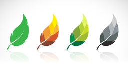 Vector image of leaves design Stock Images