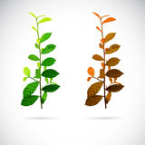 Vector image of leaves Royalty Free Stock Image