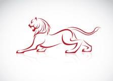 Vector image of an lion design. On white background stock illustration
