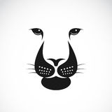 Vector image of an lions face. On white background vector illustration