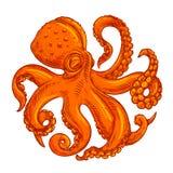 Vector image, logo octopus on white background Royalty Free Stock Photo