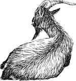 Goat. Vector image of a lying goat royalty free illustration